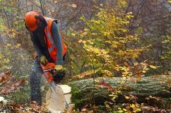 Foto de Barrie Tree Care Pros